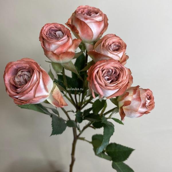 Роза садовая (микс) кустовая 40 см, кустовая роза, роза,