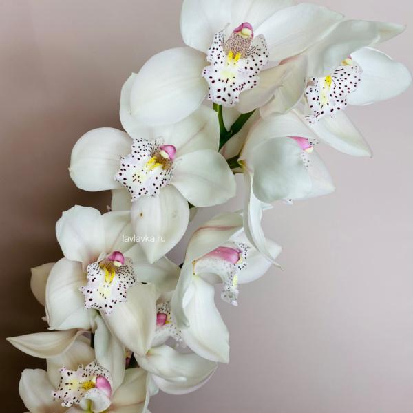 Орхидея Цимбидиум мини (микс) (1 ветка), орхидея, орхидея мини, орхидея цимбидиум, цимбидиум,