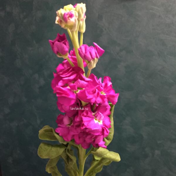 Маттиола (микс), маттиола, полевые цветы,
