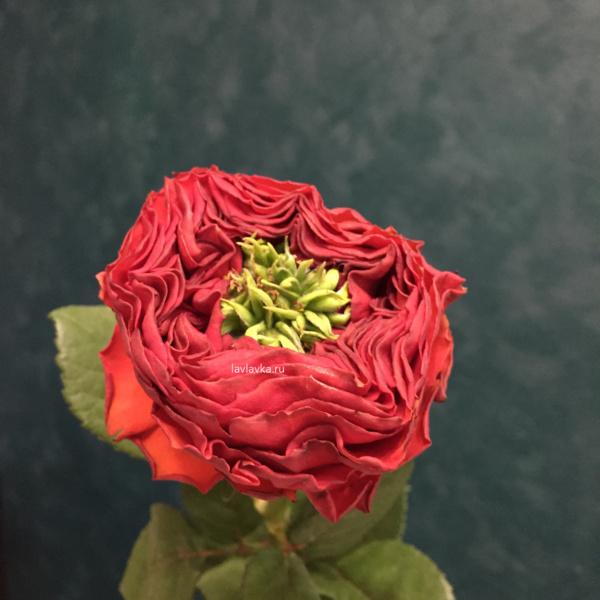 Роза ред ай 50 - 60 см, красные розы, махровая роза, махровые розы, пионовидная роза, ред ай, роза, роза ред ай, розы,