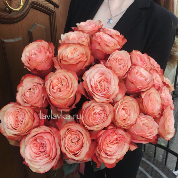 Роза пионовидная Кахала 60 см, кремовая роза, оранжевая роза, пионовидная роза, роза, роза кагала, роза кахала, розы, терракотовая роза,