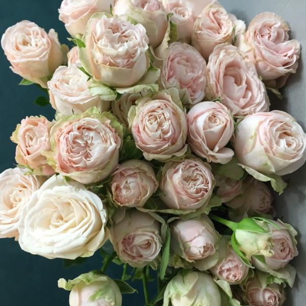 Роза кустовая пионовидная бомбастик 50 см, пионовидная роза, роза, роза бомбастик,