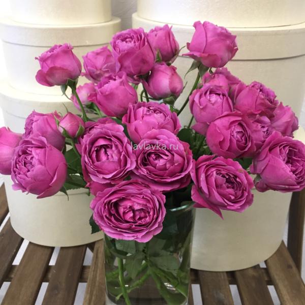 Роза пионовидная кустовая мисти бабблс 50 см, 101 малиновая роза, кустовая пионовидная роза, малиновая кустовая роза, пионовидная роза, роза, роза мисти бабблс,