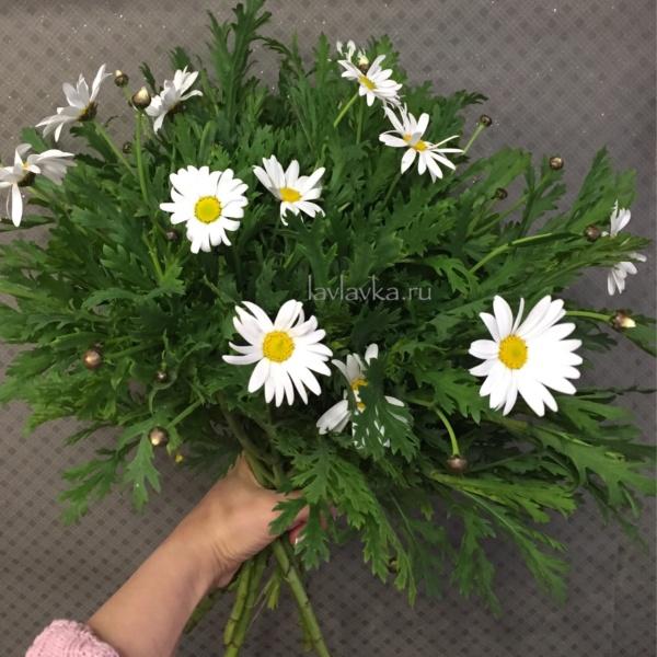 Леуконтемум (ромашка), леуконтемум, полевые цветы, ромашка,