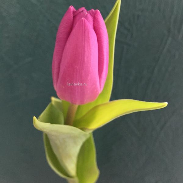 Тюльпан (микс), 101 тюльпан, белый тюльпан, букет из тюльпанов, желтые тюльпаны, красный тюльпан, купить тюлпан спб, розовый тюльпан, сиреневый тюльпан, тюльпан, тюльпан на 8 марта, тюльпаны, тюльпаны микс, тюльпаны питер,