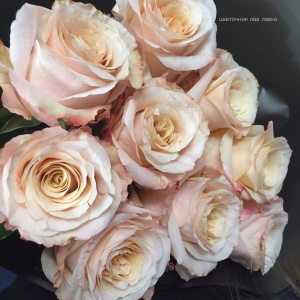 добавить в розу шиммер