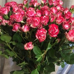 роза фаерворк