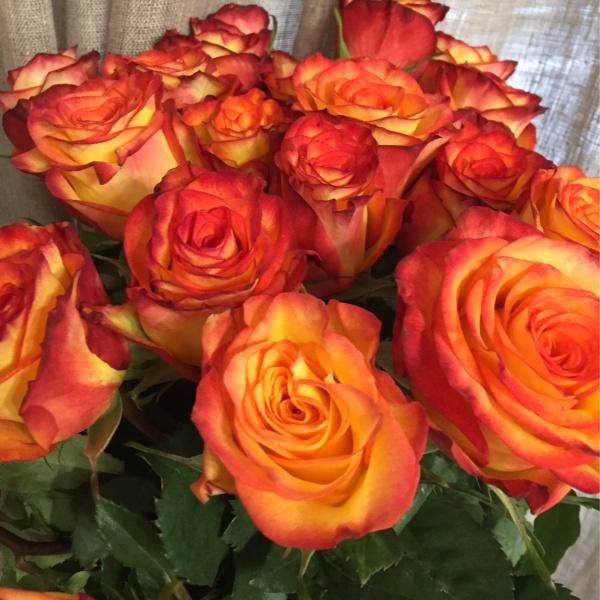 Роза импорт микс 50 см, кремовые розы, оранжевая роза, роза, роза вендела, роза хай меджик, розовая роза, розовые розы,