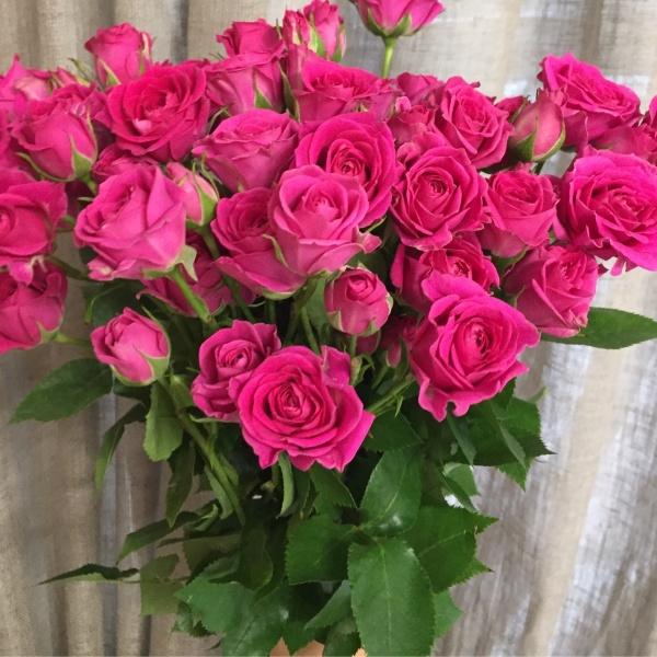 Роза кустовая 60 см (микс) импорт, букет из кустовых роз, кустовая роза, кустовые розы,