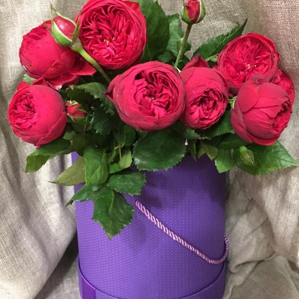 Роза пиано фрейленд 40-50 см, красная пионовидная роза, пионовидная роза, роза, роза пиано фрейленд, розы,