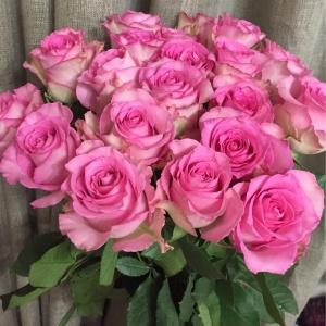 роза свит юник 50 см- 100, 60 см -120, 70 см -140 р