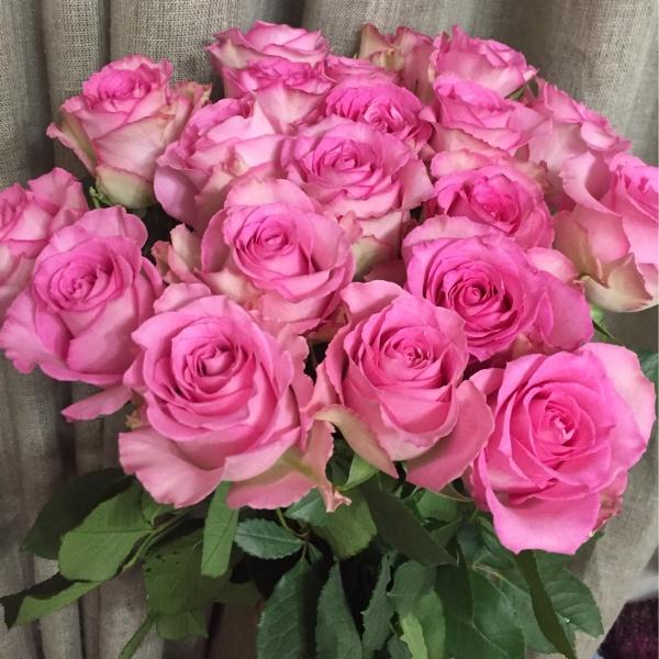 Роза импорт микс 60 см, желтые розы, роза, розовые розы, розы, сиреневые розы,