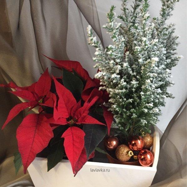 Новогодняя композиция №8, ель, кипарис, пуансеттия, рождественская звезда, цветы в ящике, эуфорбия, ящик,