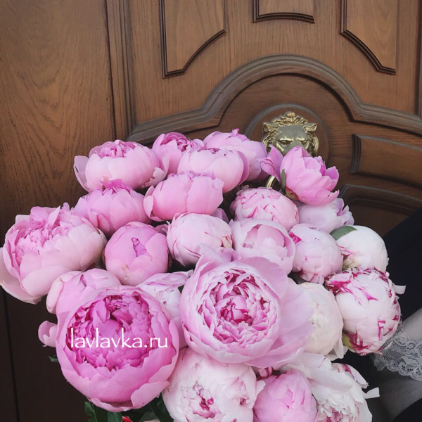 Пион Сара бернар, нежно розовый пион, пион, пион сара бернар, пионы, розовый пион, светло розовый пеион,