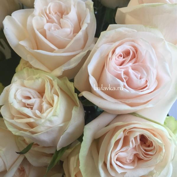 Роза пионовидная веддинг спирит 50 см, белая пионовидная роза, пионовидная роза, розы,