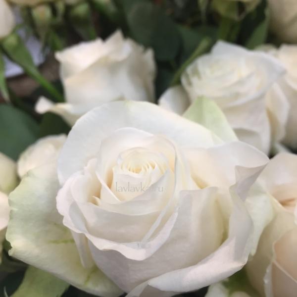 Роза импорт вендела 50 см, кремовая роза, роза, розы, розы на 14 февраля, розы на 8 марта, цветы на 14 февраля, цветы на 8 марта,
