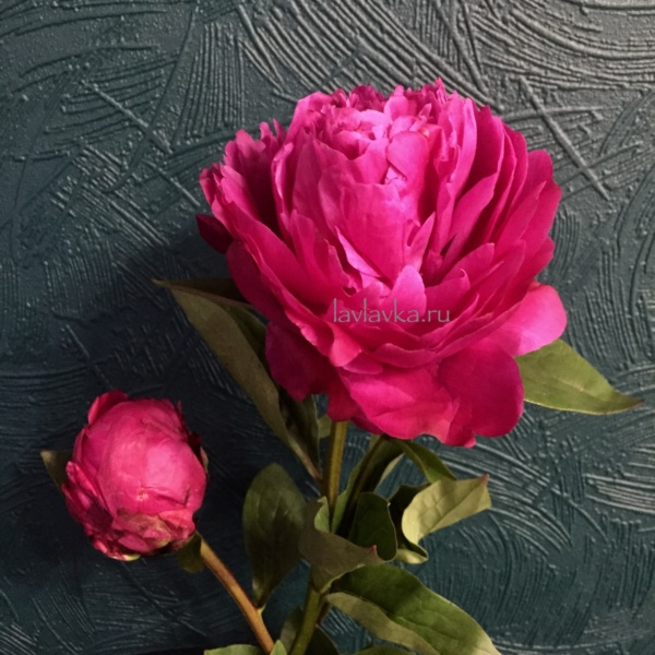Пион ред сара бернар, малиновый пион, пион, пион ред сара бернар, пионы, ярко розовый пион,