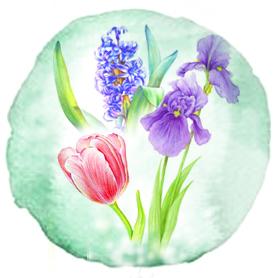 Тюльпаны, гиацинты, ирисы