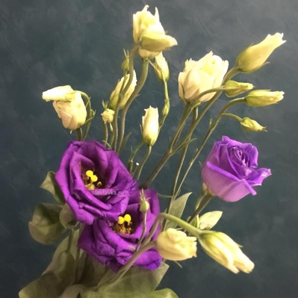 Лизиантус (эустома) розита блю, лизиантус, лизиантус розита блю, лизиантус синий, эустома, эустома розита блю, эустома синяя,