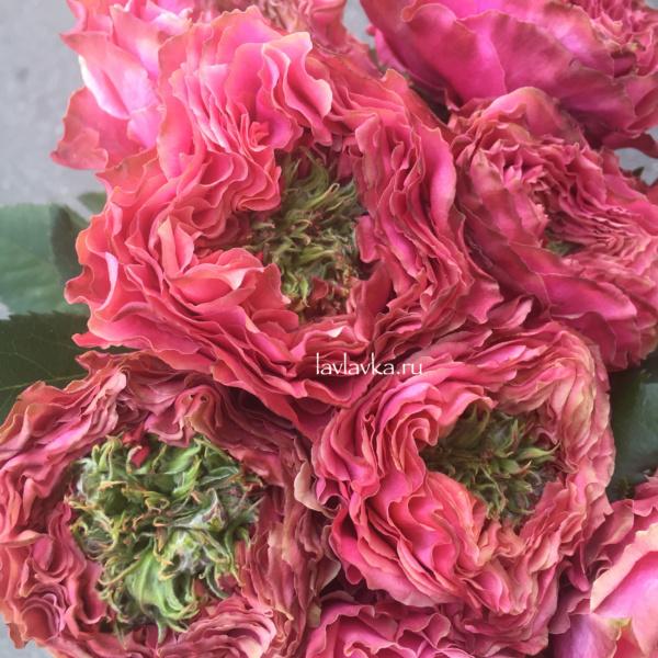 Роза пинк ай 50 см, пионовидная роза, розовая роза пионовидная,
