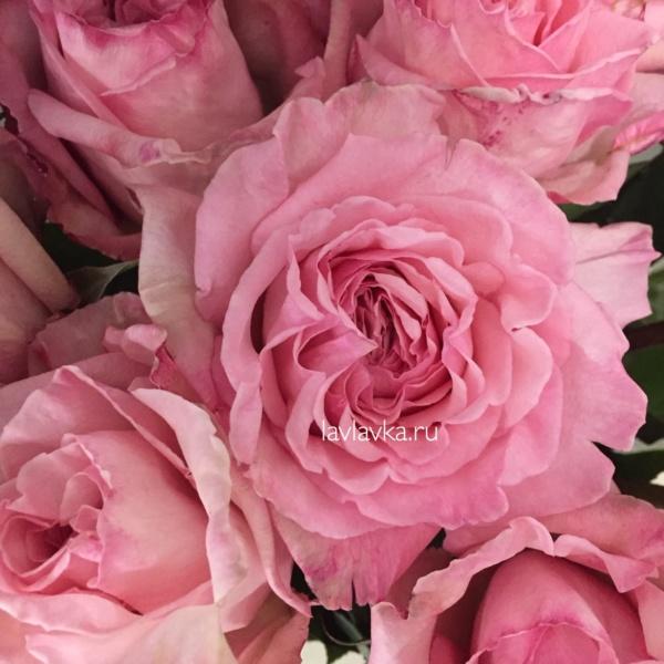 Роза пионовидная пинк о хара 50 см, пионовидная роза, пионовидная розовая роза, роза о хара, роза пинк о хара, роза пионовидная, розовая роза,
