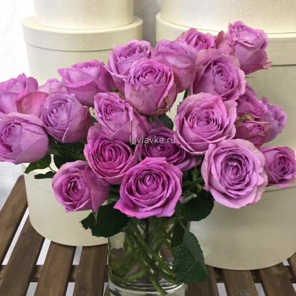 Роза пионовидная кустовая лавендер лейс 40-50 см, пионовидная роза, роза кустовая пионовидная, сиреневая кустовая роза, сиреневая роза,