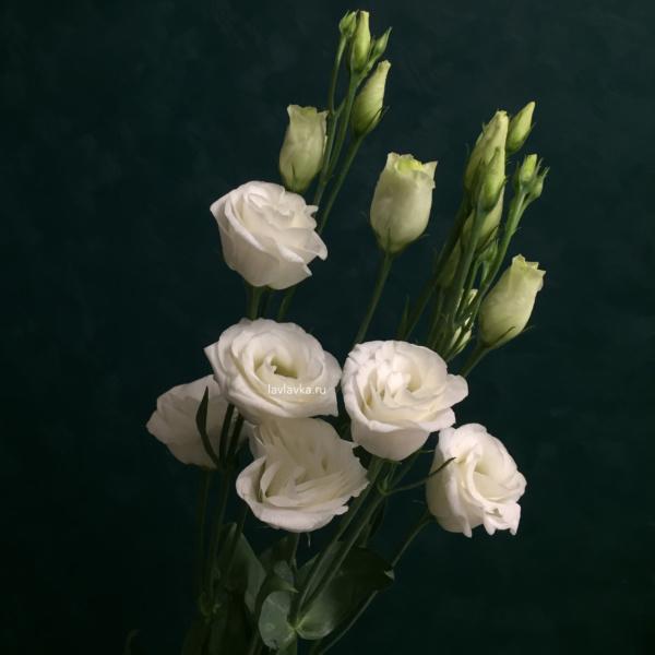 Лизиантус (эустома) розита вайт, лизиантус, лизиантус белый, лизиантус розита вайт, эустома, эустома белая, эустома розита вайт,