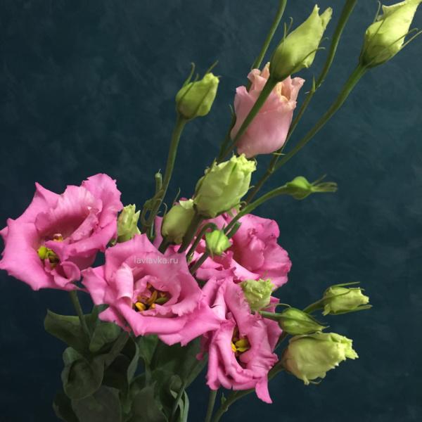 Лизиантус (эустома) корели априкот, лизиантус, лизиантус корели априкот, розовый лизиантус, эустома,