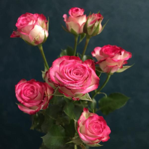 Роза кустовая халей 70 см, букет из кустовых роз, кустовая роза, кустовая роза 70 см, кустовая розовая роза, кустовые розы, розовая роза, розы,