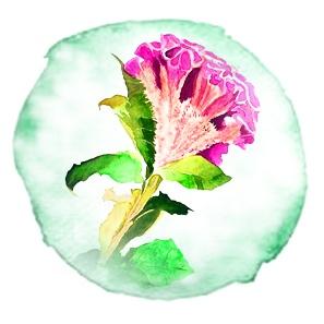 Экзотические цветы