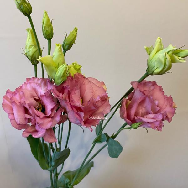 Лизиантус (эустома) алиса пинк, лизиантус, лизиантус алиса пинк, розовый лизиантус, эустома,