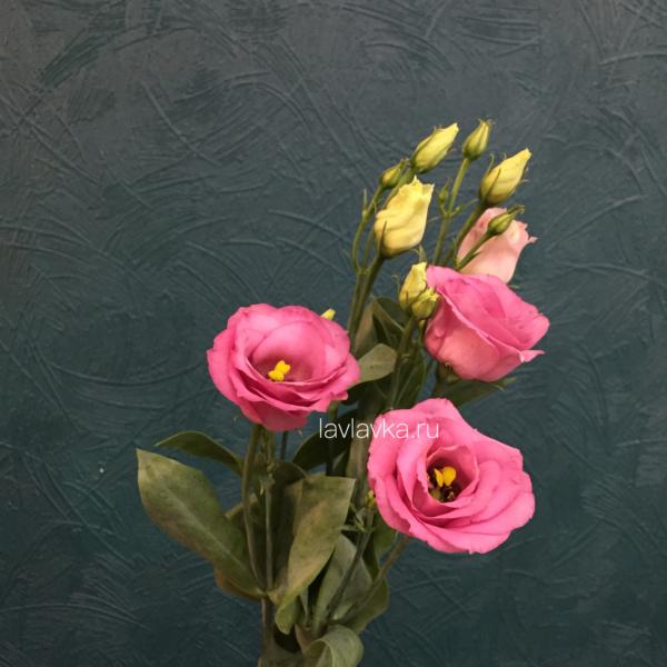 Лизиантус розита пинк, лизиантус розита пинк, лизиантус розовый, эустома, эустома розовая,