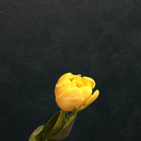 Тюльпан пионовидный желтый, желтые тюльпаны, желтый тюльпан, махровые тюльпаны, махровый тюльпан, пузатые тюльпаны, тюльпаны, тюльпаны на 8 марта, цветы на 8 марта,