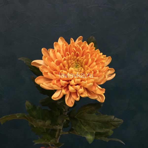 Хризантема стандартная Россана оранж, рыжая хризантема, хризантема, хризантема одноголовая, хризантема оранжевая, хризантема стандартная,